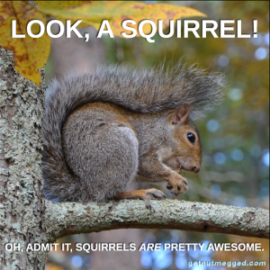 ADHD Look a Squirrel GetNutMegged