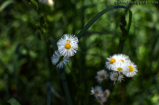Nature Photography White Flowers